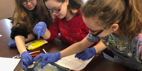 Students dissecting eggs in the agriculture class