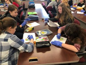 Students dissecting eggs in class